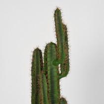 LABEL51  Cactus - Groen - Kunststof - 130